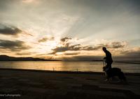 SONY ILCE-7Sで撮影した(光がはじけた朝)の写真(画像)