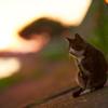 黄昏少し前 猫