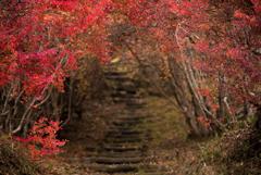 秘密のトンネル