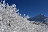 霧氷と久住山と青空と