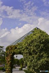 蔦の絡まる建物