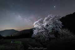 銀河桜 2018