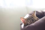 冬の日差しと猫の夢