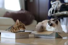 箱入り猫's