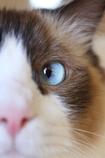 青い瞳のソラ