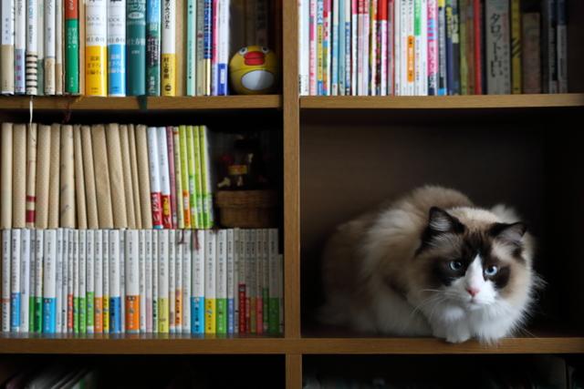 猫のいる部屋