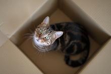 ネコ捕獲装置