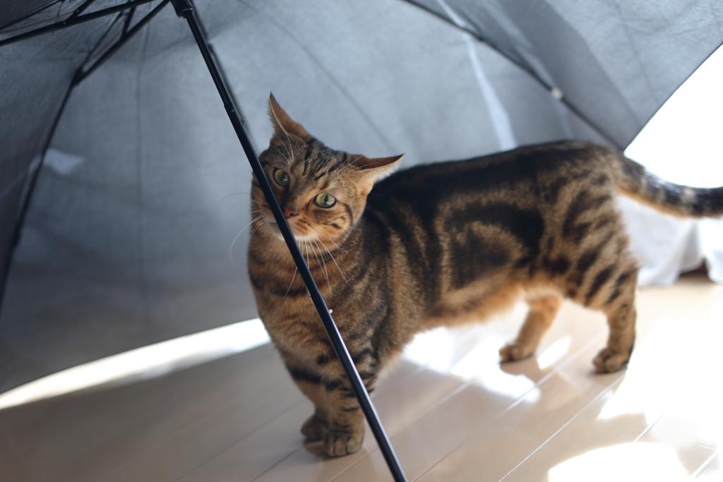 雨のにほい