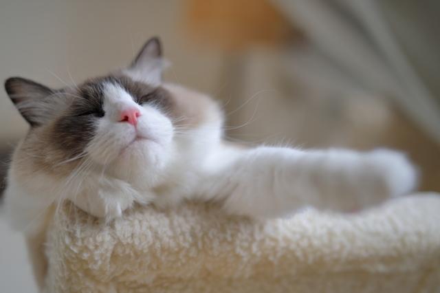 猫年の夢を見ていま...