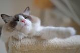 猫年の夢を見ています。