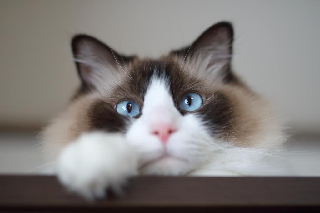 進撃の巨猫