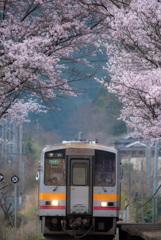桜をくぐって