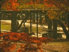 Autumn in Nara