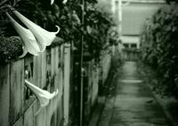 OLYMPUS PEN-Fで撮影した(lily ally)の写真(画像)