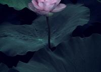 OLYMPUS PEN-Fで撮影した(princess of  the pond)の写真(画像)
