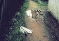 OLYMPUS PEN-Fで撮影した(after the storm)の写真(画像)