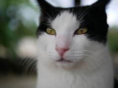 竹富島の猫