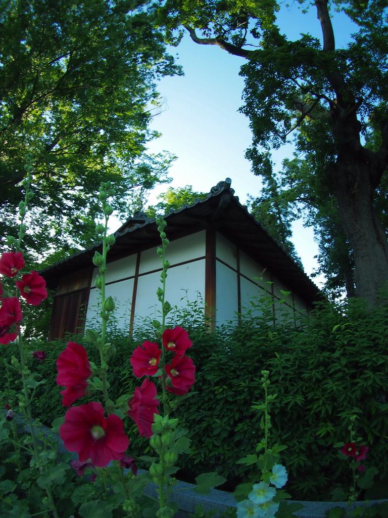 トワイライトな松本神社