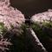 桜の花びら散るたびに