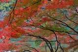 紅の葉は流れて