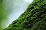 ぬめりの森2