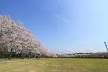 伊佐の春5