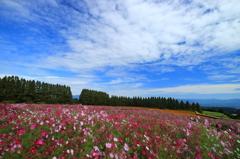 生駒高原の空