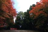 秋深まる~霧島神宮
