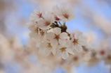 伊佐の春2