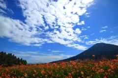 生駒高原の風