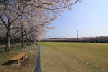 伊佐の春1