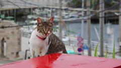 漁師村の猫