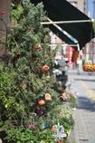 花屋のハロウィン1