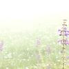 花と光と靄と(2)