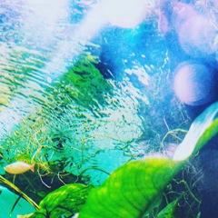 水中から天を仰ぐ