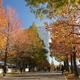 グランモール公園の秋
