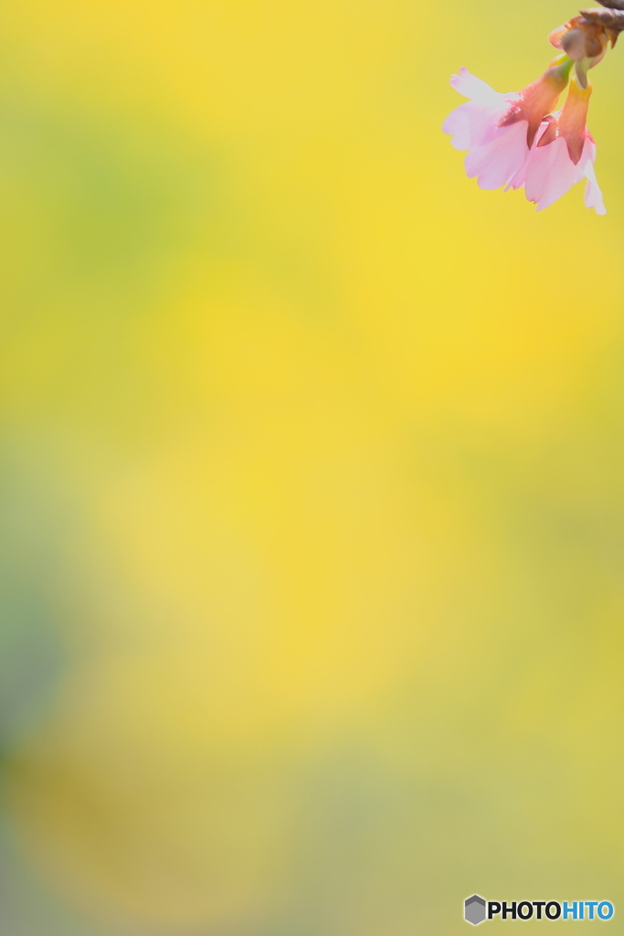 春スイッチ