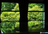 OLYMPUS E-M1で撮影した(緑倍増計画)の写真(画像)