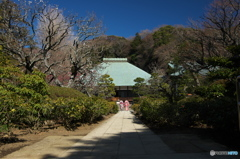 鎌倉逍遙(浄妙寺)