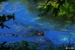 空色映す緑の流れに