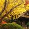 鎌倉Now11(報国寺1)