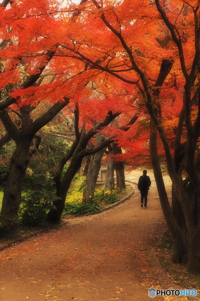 鎌倉Now09(源氏山公園)