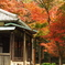 鎌倉Now03(長寿寺)