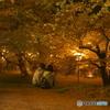 思い出桜8