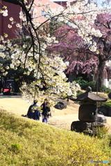 春そぞろ04(浅草寺)