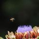 魅力の花と蜂