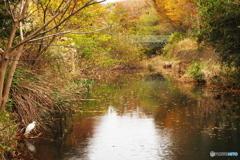 秋流れゆく