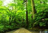 緑葉の誘惑2(東慶寺)