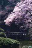 春そぞろ03(新宿御苑)