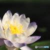 花活き活き